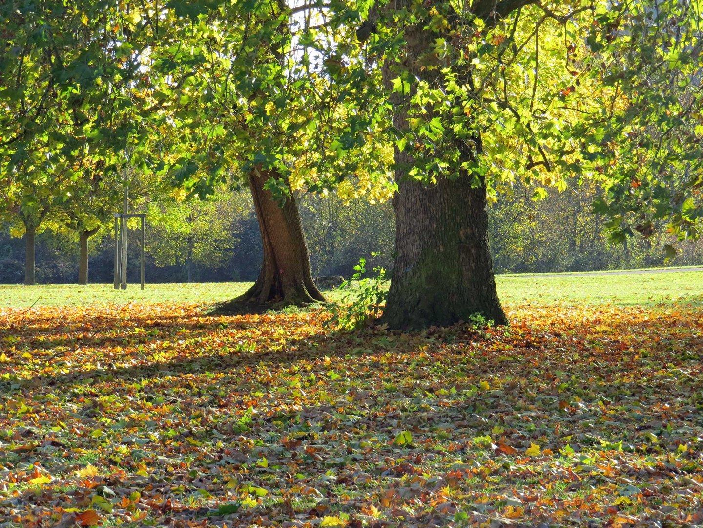 Goldener Oktober --- Fehlanzeige