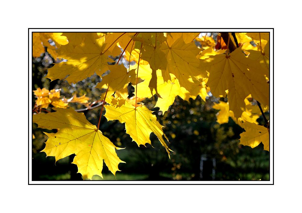 Goldener Oktober II 2010
