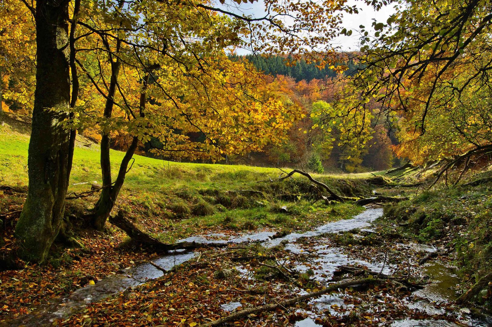 Goldener Oktober im Wittgensteiner Land IV