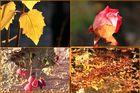 Goldener Oktober war gestern ! ....