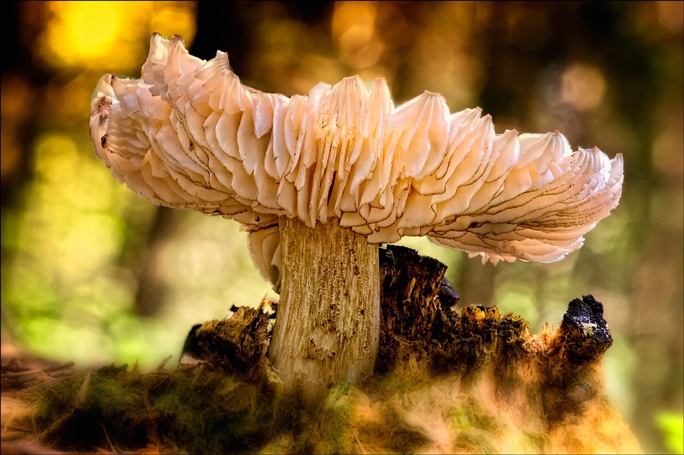 goldener Pilzherbst