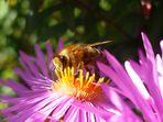 Goldenes Bienchen
