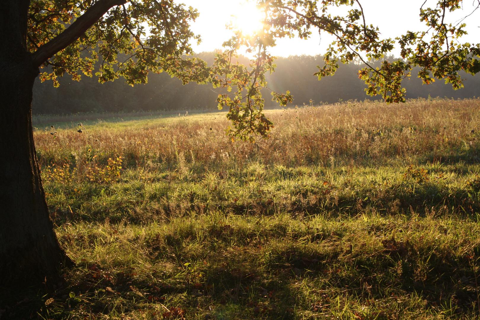 Goldenes Herbstfeld