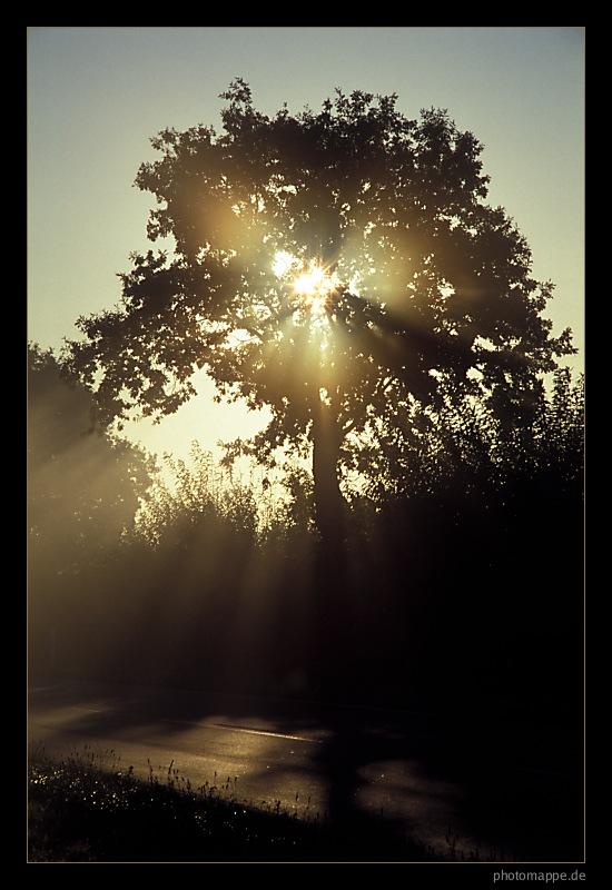 Goldenes Herbstlicht