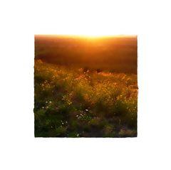 - goldenes licht -