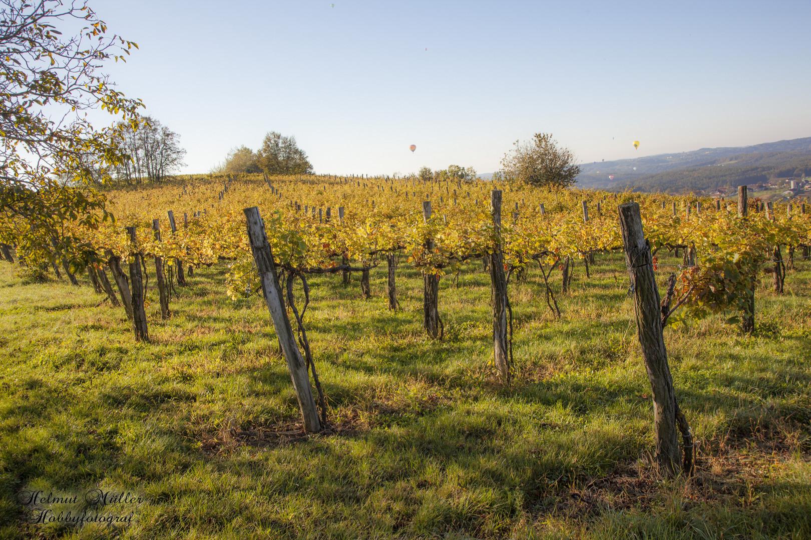 Goldenes Weinlaub
