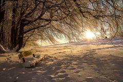 Goldenes Winterlicht