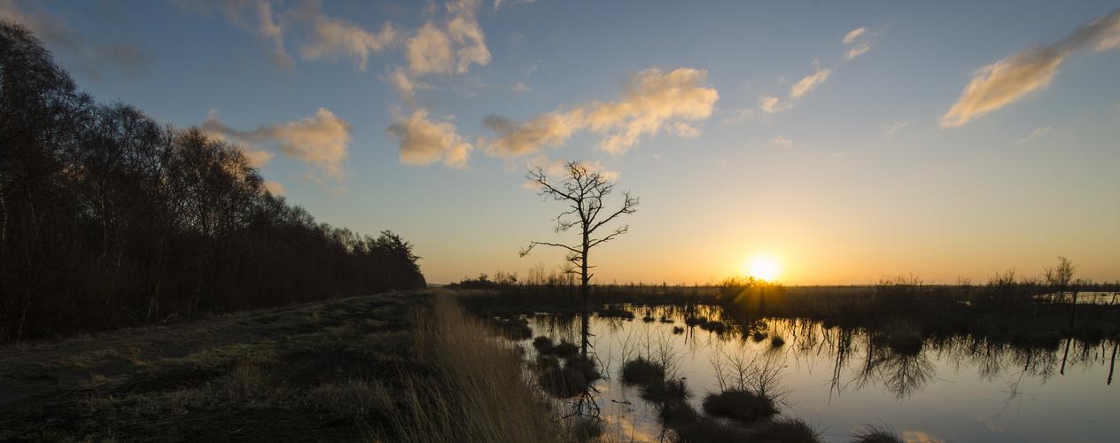 Goldenstedter Moor jan 2014