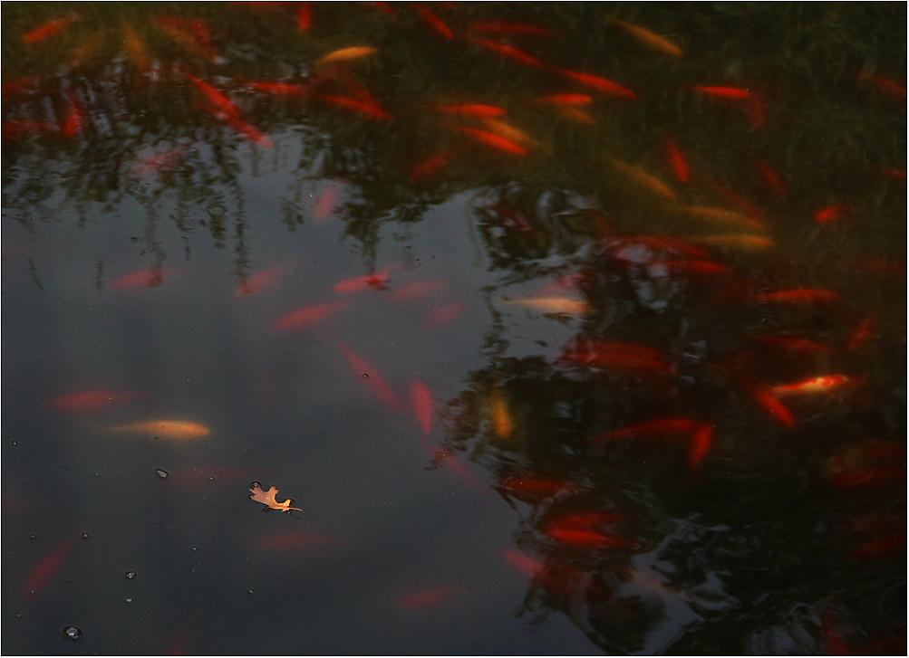 Goldfische ...