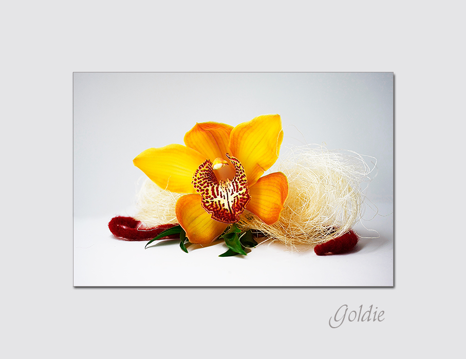 Goldie -1-