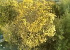 goldiger Herbst