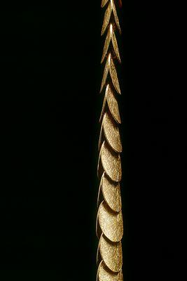 Goldkette Detail