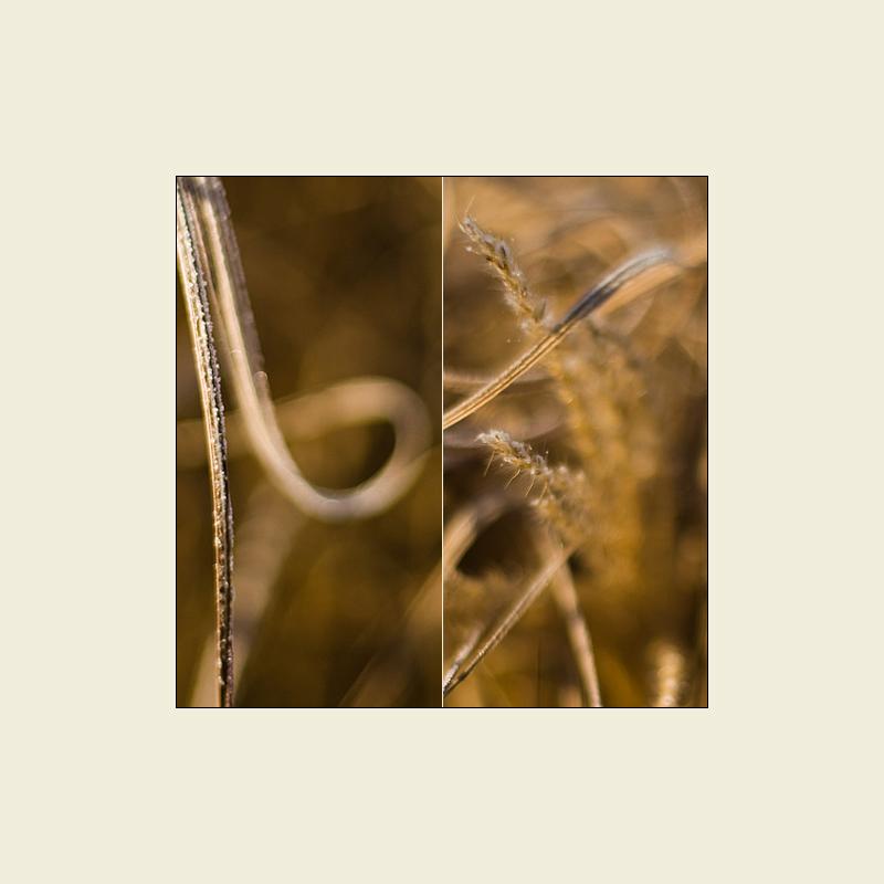 Goldline-NLD