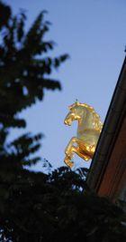 Goldpferd