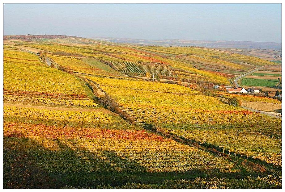 Goldrausch im Weinviertel