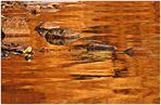 Goldwasser mit Steine