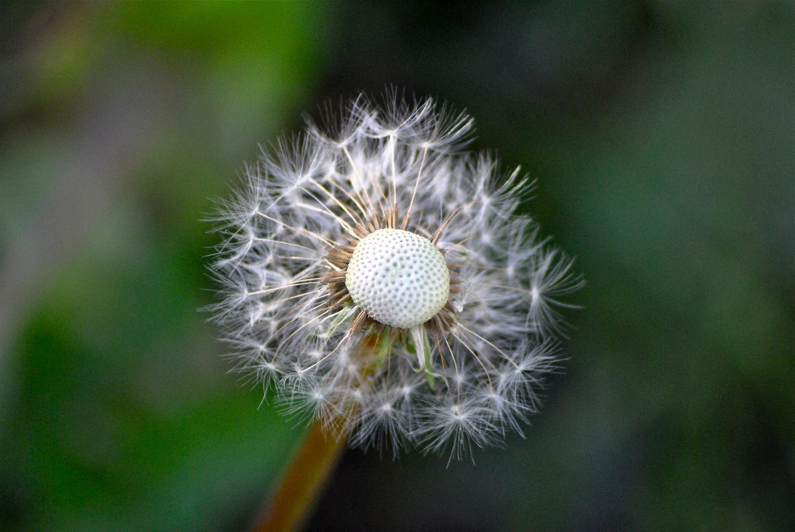 golf como flor