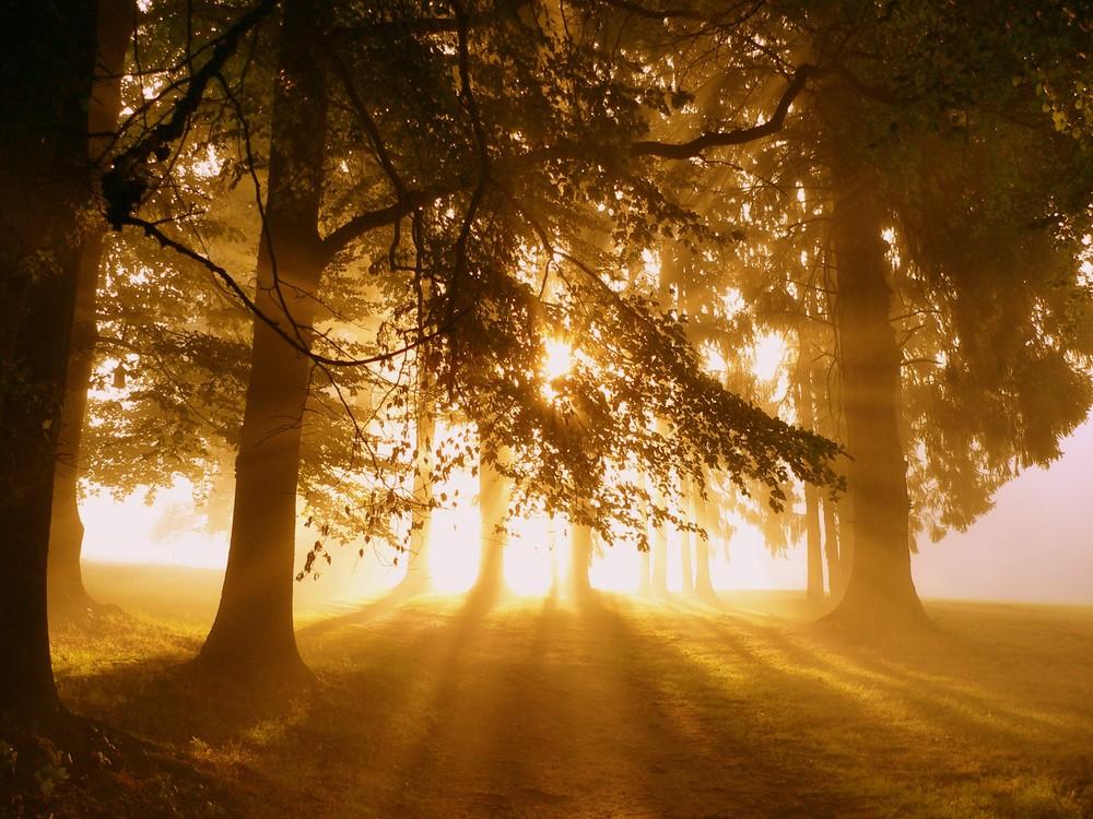 Golfplatz im Nebel - die 2te