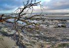 Gollwitz Strand Baum und Steine