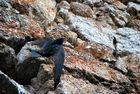 golondrina atrapada por un ala ha 4 metros de altura