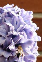 goloso invitado de jacinto