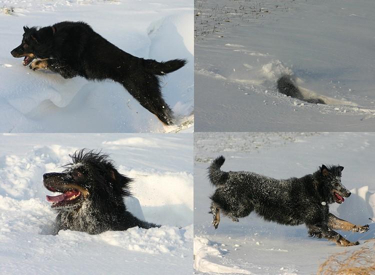 Gonzo liebt den Schnee:-)