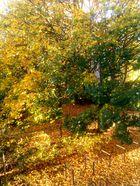 Good morning, beautiful autumn..