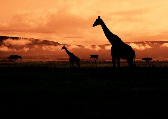 Good Morning Kenya!