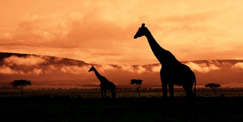 Good Morning Kenya! reload