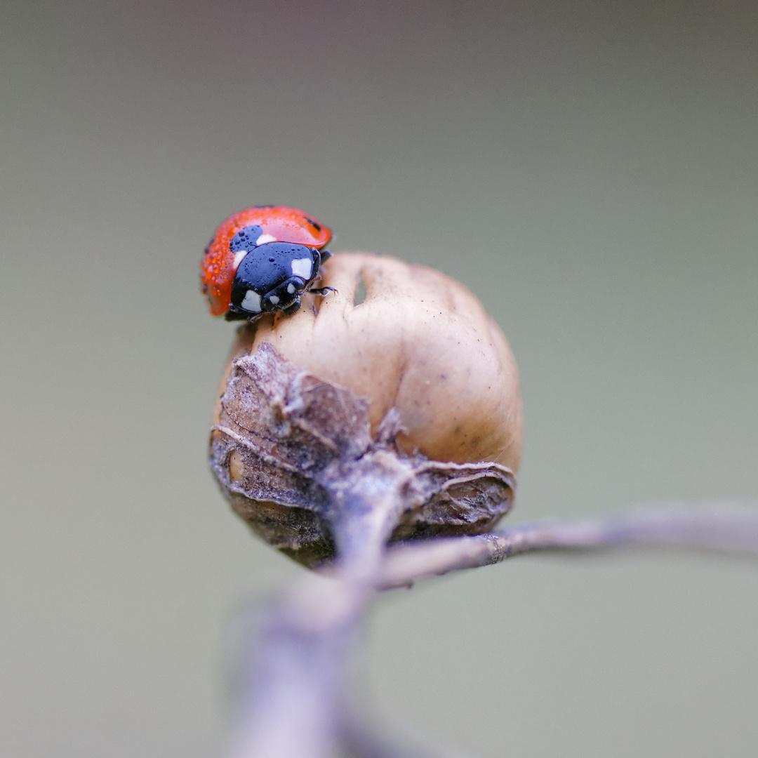 Good Morning Little Bug