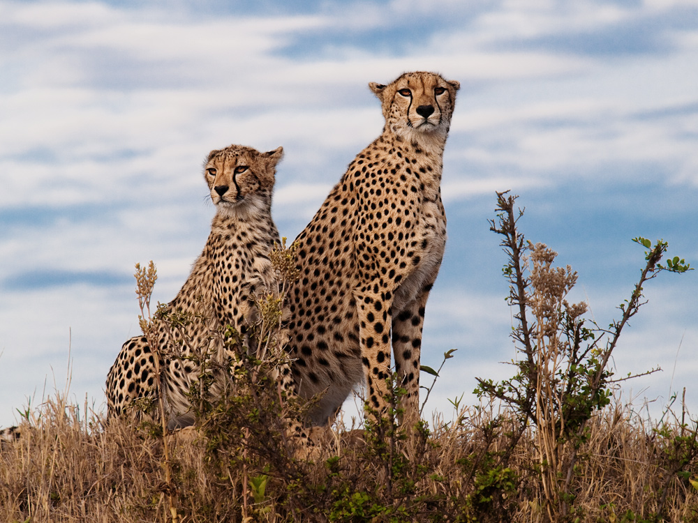 Good Morning Masai Mara