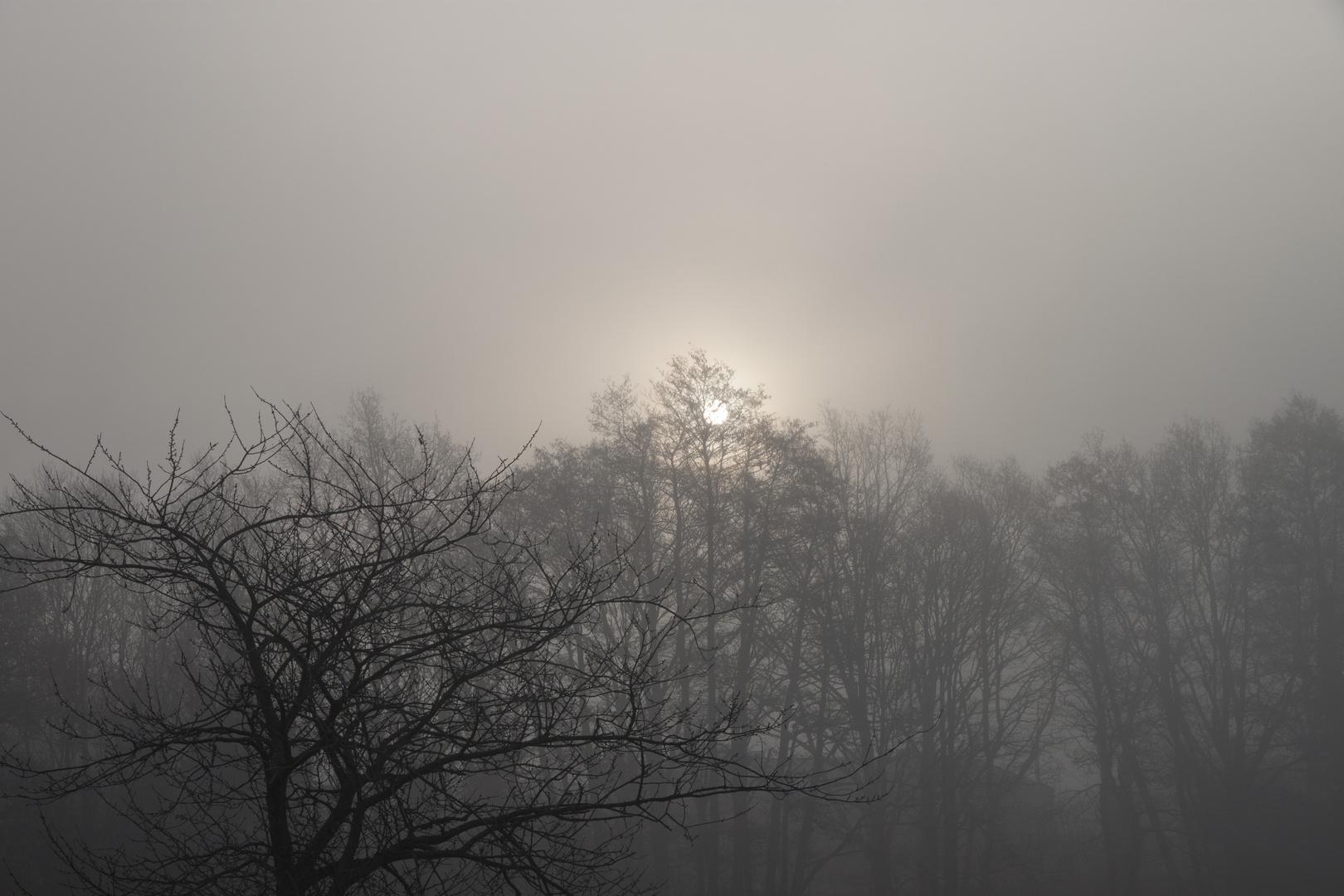 Good morning, Sun :)