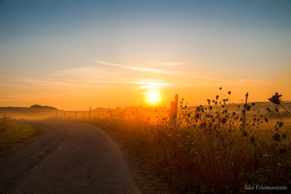 Good morning sunshine II