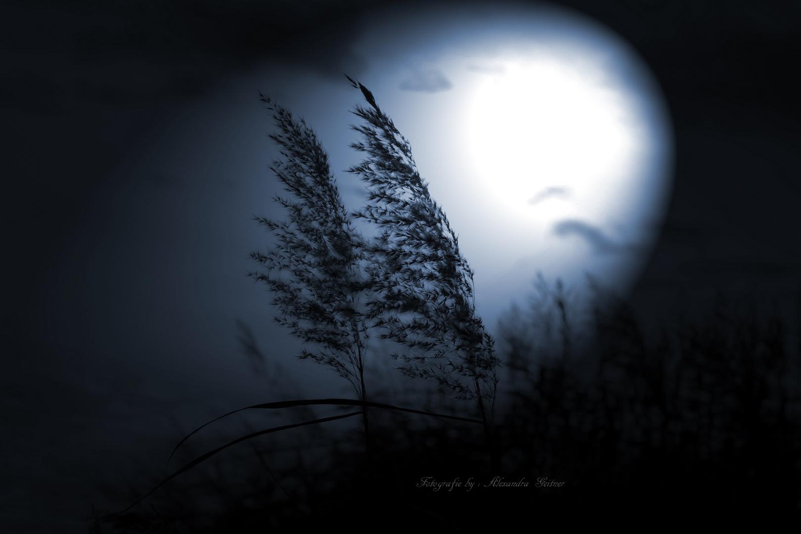 Good Night .......