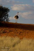 Goodby Kalahari