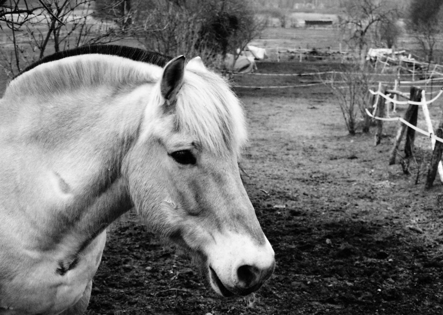 Goodbye horses, I'm flying over you