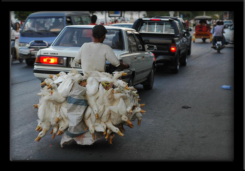 Goose-bus Phnom Penh