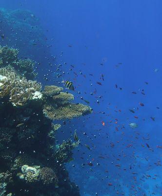gorgeous life underwater
