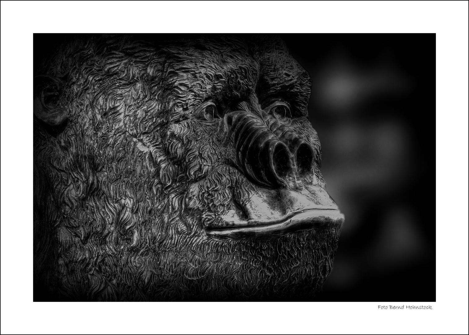 Gorilla ...