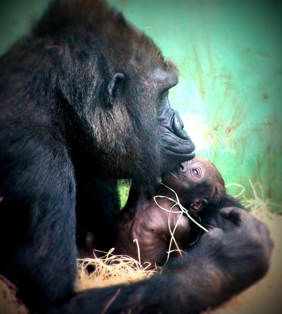 Gorilla Baby&Mama