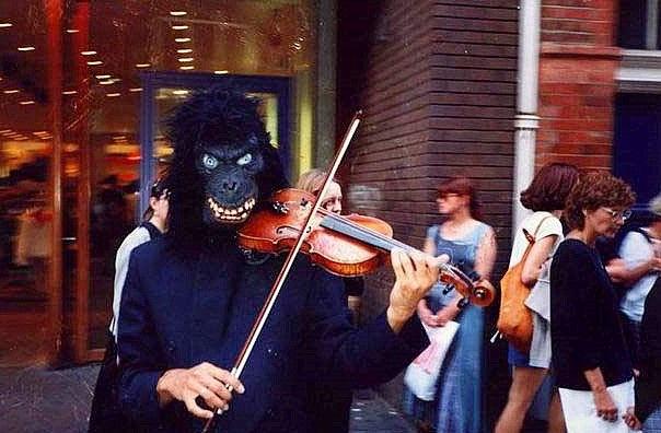 Gorilla bei der Arbeit