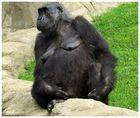 Gorilla Dame