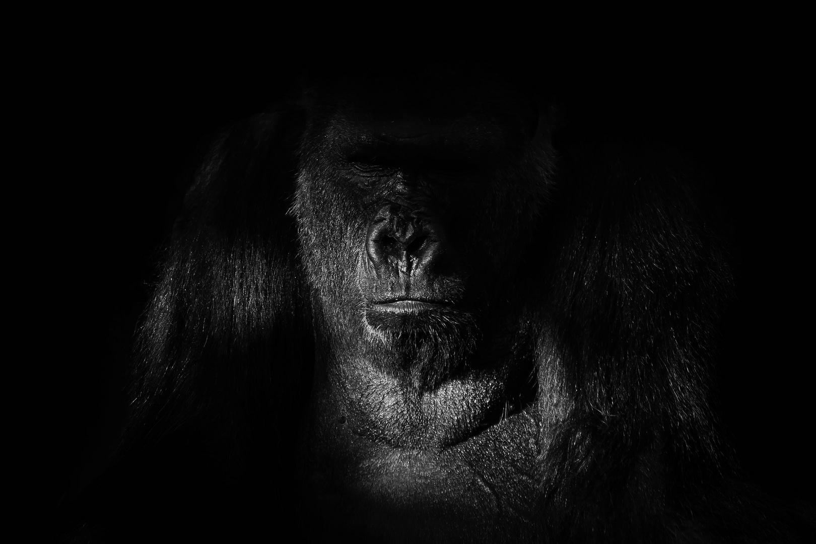 Gorilla - Low Key