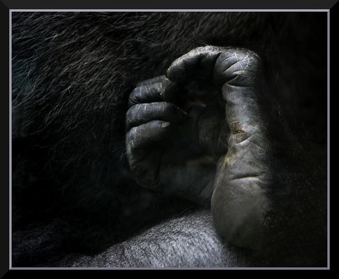 Gorilla mit Herz