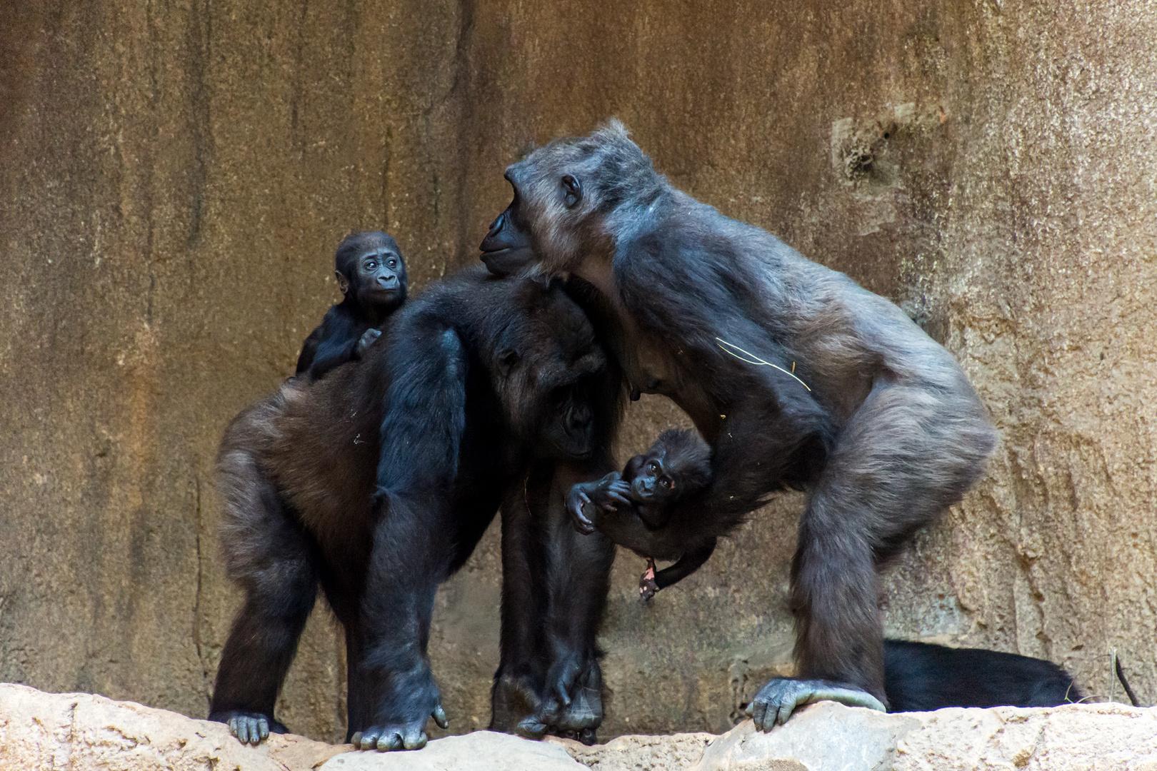Gorilla-Mütter