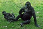 Gorilla - Mutter und Kind - nun spiel doch endlich mit mir -