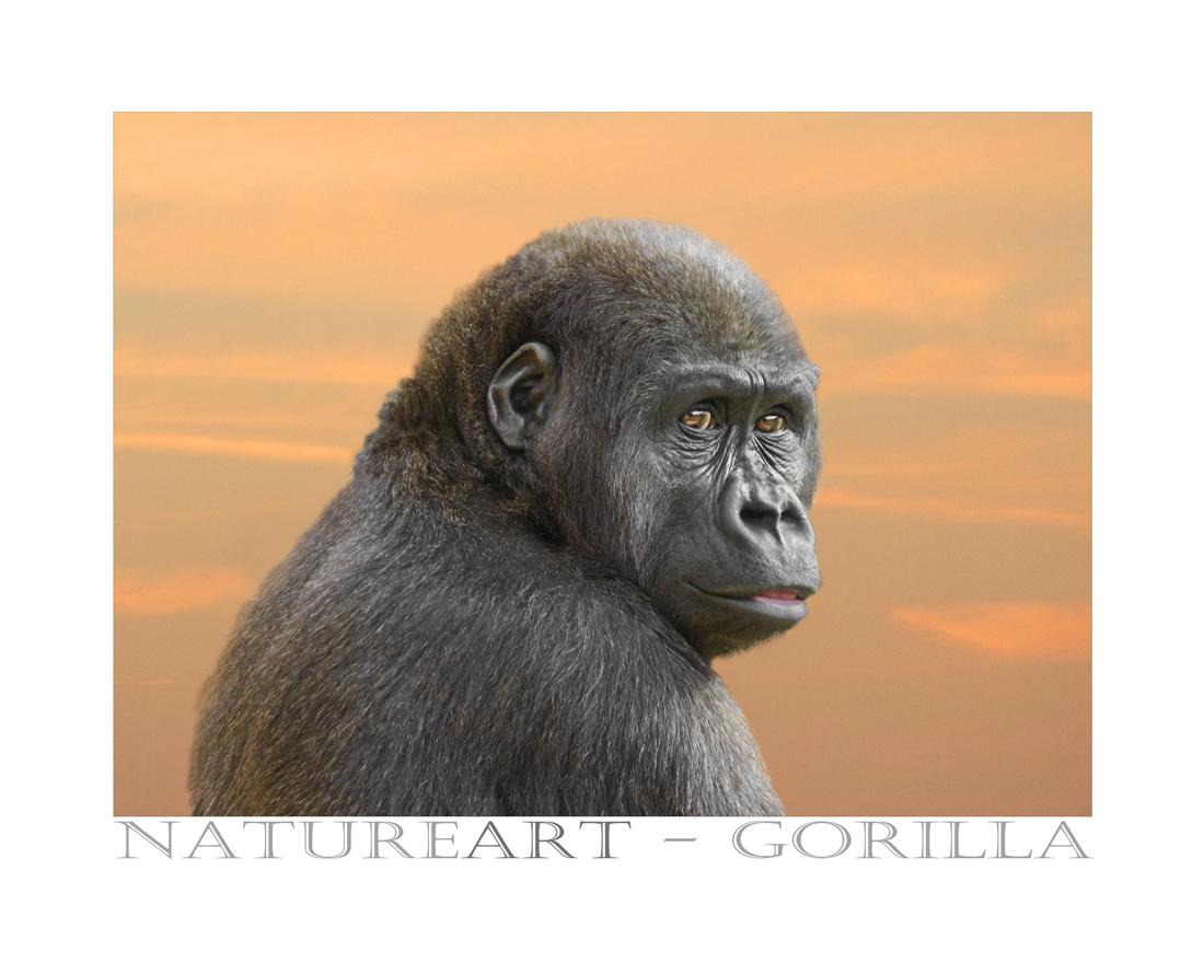 Gorilla Portrait - Sprechende Augen