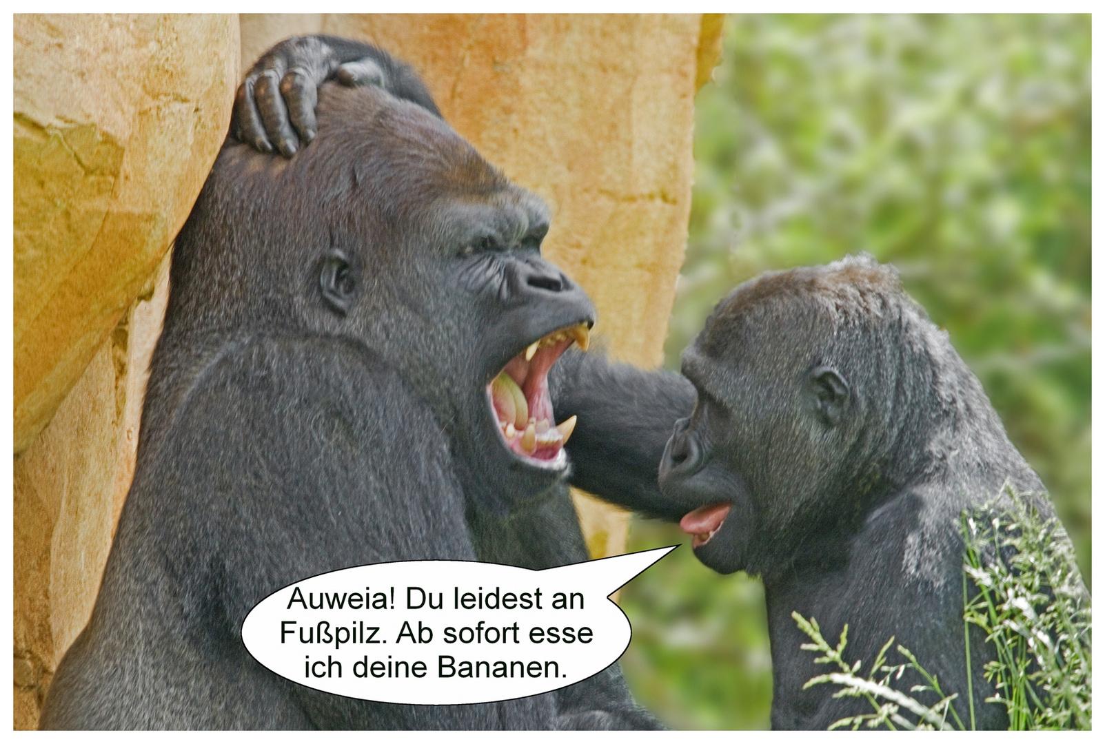 gorilla stellt diagnose