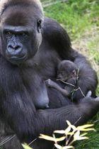 Gorillababy 4