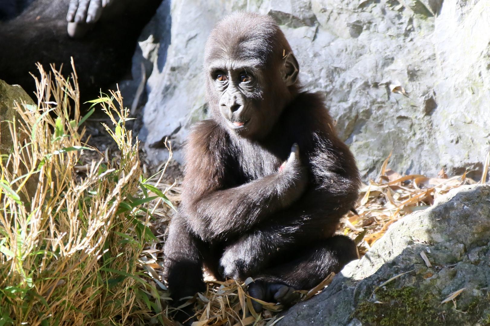 Gorillamädchen